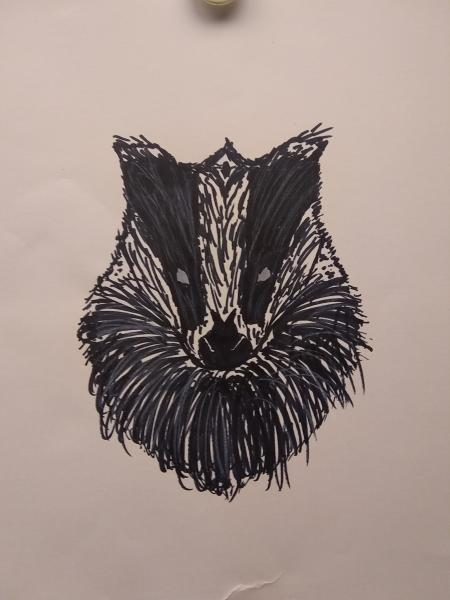 Drawing of a Badger