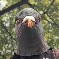Photograph of Joel Salcido wearing a pigeon mask